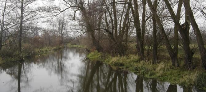 Wola Bierwiecka – Radom   27 km.  11.XI.2006