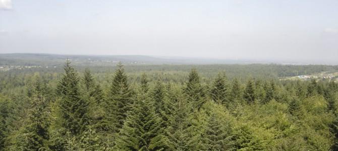 Chlewiska – Skarżysko-Kamienna   31 km     12.IX.2006
