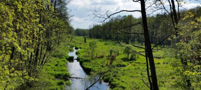 Radom – rez. Źródło Królewskie  87 km